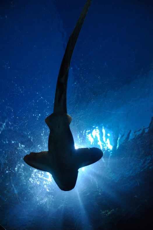 fish aquarium thailand royalty free
